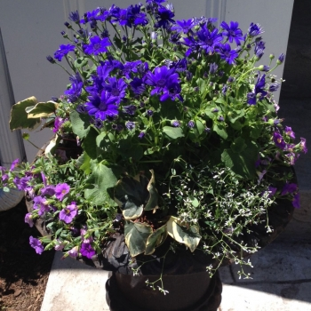 planter_ideas