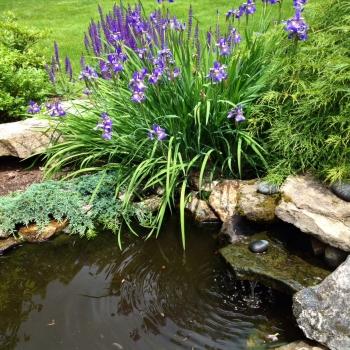 garden_pond