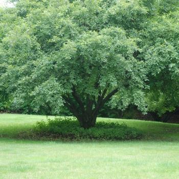 trees7