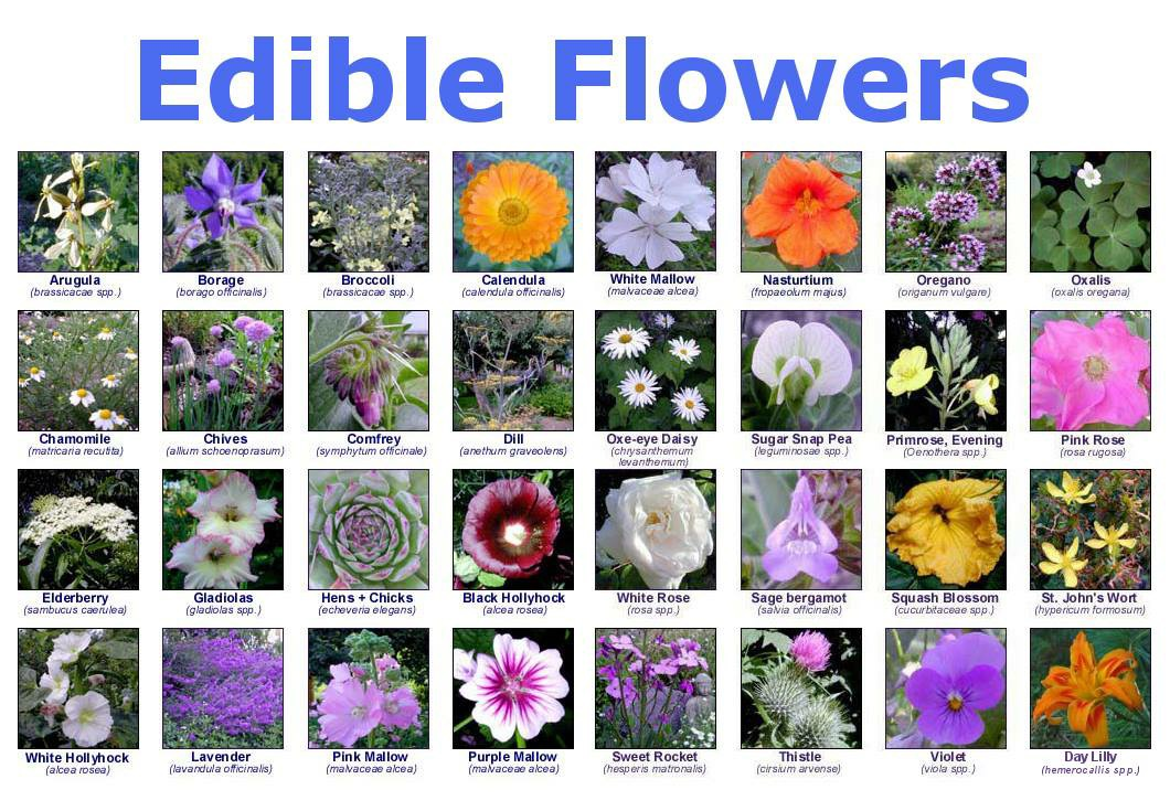 Edible flowers the earth education company for Best garden design books 2015